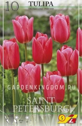 Тюльпан триумф  SAINT PETERSBURG, 10 шт