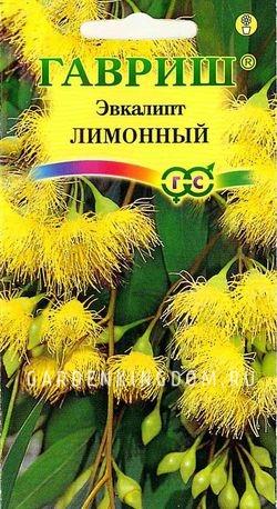 Купить семена Эвкалипт лимонный Флагман Гавриш  Интернет