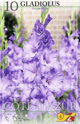 Гладиолус крупноцветковый Блю Фрост