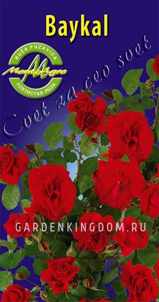 Плетистая роза байкал отзывы