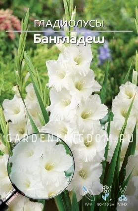 Гладиолус крупноцветковый БАНГЛАДЕШ, 7 шт.