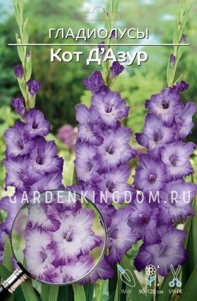 Гладиолус крупноцветковый КОТ ДЕ АЗУР, 7 шт.