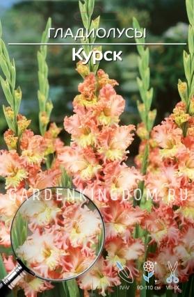 Гладиолус крупноцветковый КУРСК, 5 шт.