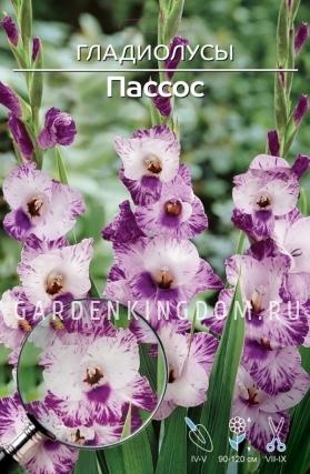 Гладиолус крупноцветковый ПАССОС, 7 шт.