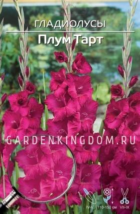 Гладиолус крупноцветковый ПЛУМ ТАРТ, 7 шт.