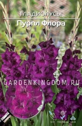 Гладиолус крупноцветковый ПУРПЛ ФЛОРА, 7 шт.