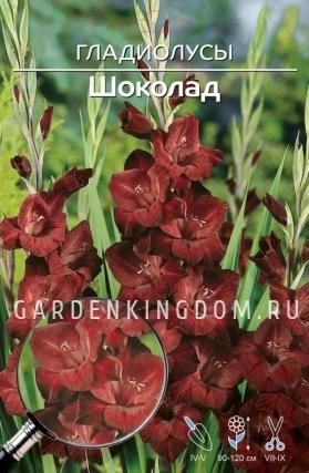 Гладиолус крупноцветковый ШОКОЛАД, 7 шт.