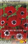 Анемона коронария HOLLANDIA, 20 шт