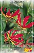 Глориоза ROTHSCHIDIANA, 1 шт