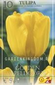 Тюльпан Дарвинов гибрид GOLDEN OXFORD, 10 шт