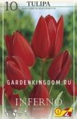 Тюльпан многоцветковый INFERNO, 10 шт