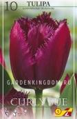 Тюльпан бахромчатый  CURLY SUE, 10 шт