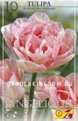 Тюльпан пионовидный  ANGELIQUE, 10 шт