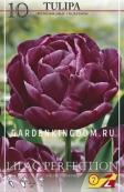 Тюльпан пионовидный  LILAC PERFECTION, 10 шт
