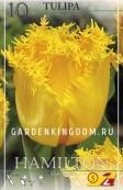 Тюльпан бахромчатый  HAMILTON, 10 шт