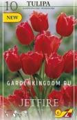 Тюльпан бахромчатый  JETFIRE, 10 шт