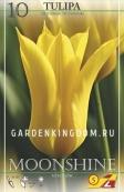 Тюльпан лилейный  MOONSHINE, 10 шт
