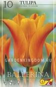 Тюльпан лилейный  BALLERINA, 10 шт