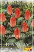Тюльпан Грейга DIANTHA, 10 шт