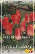 Тюльпан Грейга SWEET LADY, 10 шт