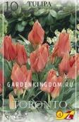 Тюльпан многоцветковый TORONTO, 10 шт