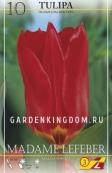 Тюльпан Фостера MADAME LEFEBER, 10 шт