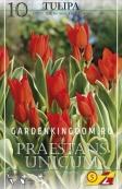 Тюльпан многоцветковый PRAESTANS UNICUM, 10 шт