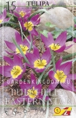 Тюльпан ботанический PULCHELA EASTERN STAR, 15 шт