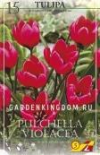 Тюльпан ботанический PULCHELA VIOLACEA, 15 шт