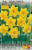 Нарцисс трубчатый  CARLTON, 25 шт