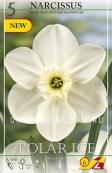 Нарцисс мелкокорончатые  POLAR  ICE, 5 шт