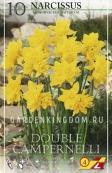 Нарцисс ботанический  DOUBLE CAMPERNELLI, 10 шт