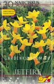 Нарцисс ботанический  JETFIRE, 30 шт