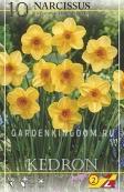 Нарцисс ботанический  KEDRON, 10 шт