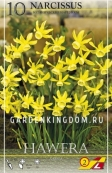 Нарцисс ботанический  HAWERA, 10 шт