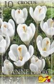Крокус крупноцветковый GEANNE D'ARC, 10 шт