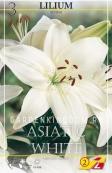 Лилия азиатская ASIATIC WHITE, 3 шт.