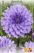 Георгина декоративная BLUE BOY, 1 шт.