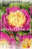 Пион BOWL OF BEAUTY, 1 шт.