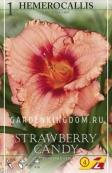 Лилейник (хемерокалис) STRAWBERRY CANDY, 1 шт