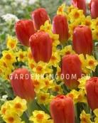 Смесь тюльпанов и нарциссов SUNCHINE, 15 шт