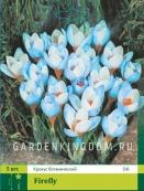 Крокус ботанический  FIREFLY, 5 шт