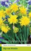 Нарцисс ботанический  RIP  VAN  WINKLE, 3 шт