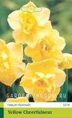 Нарцисс тацетта (многоцветковый)  YELLOW CHEERFULNES, 2 шт