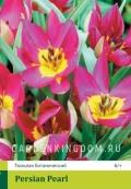 Тюльпан ботанический PERSIAN PEARL, 20 шт
