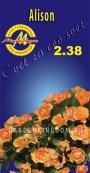 Роза флорибунда ALISON