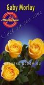 Роза чайно-гибридная GABY MORLAY