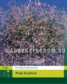 Гипсофила PINK FESTIVAL, 1 шт
