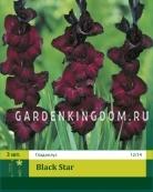 Гладиолус крупноцветковый BLACK STAR, 3 шт.