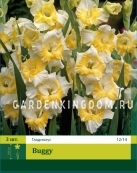 Гладиолус крупноцветковый BUGGY, 3 шт.